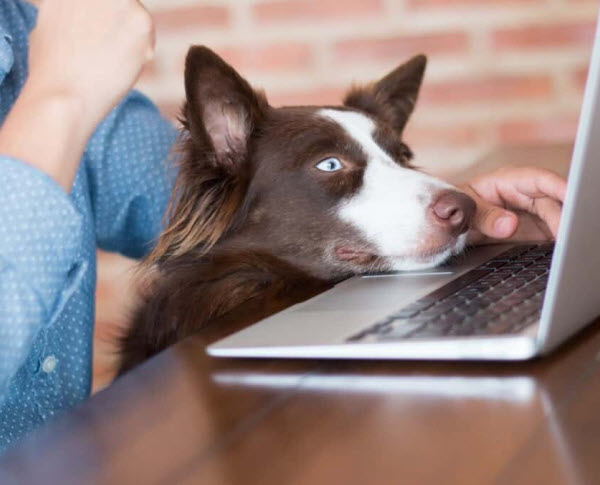 Vetaround- A dog in front of a laptop