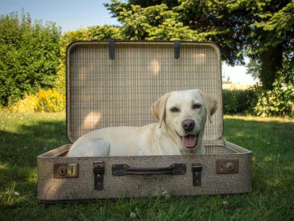 Vetaround - Adorable dog inside a suitcase