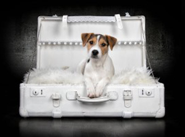 Vetaround - A dog inside a suitcase