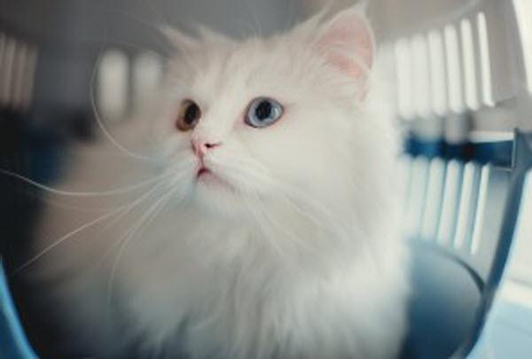 Vetaround - White cat