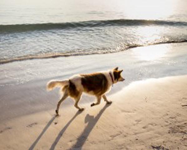Vetaround - a dog walking along the beach