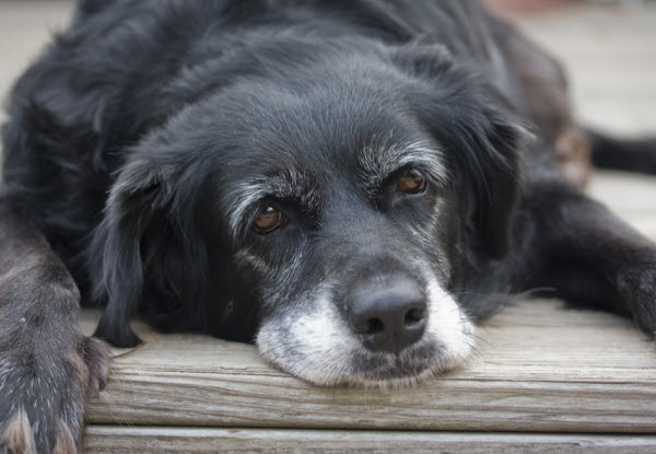 Vetaround- Health-check-in-older-pets