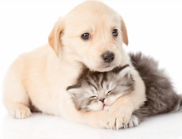 Vetaround - Health-check-in-younger-pets