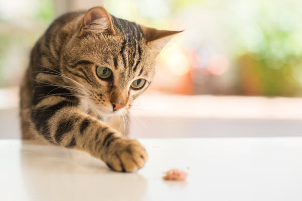 What cats can eat as part of a healthy diet