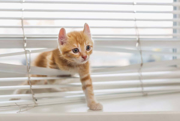 Vetaround - A kitten sneaking out of a window