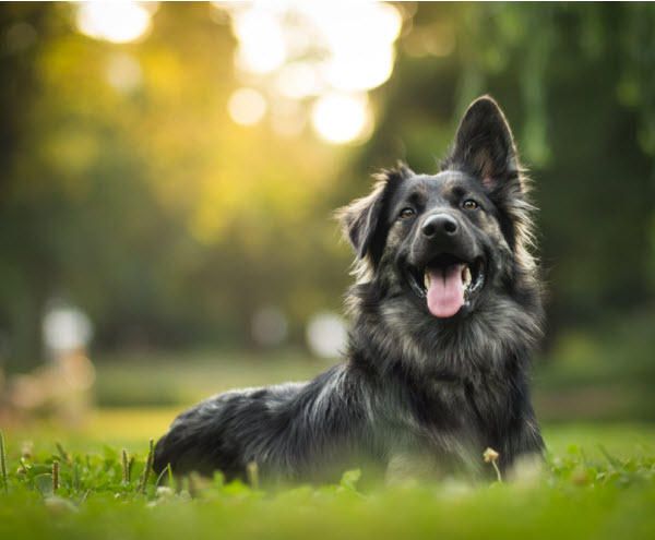 Vetaround - Amazing-portrait-of-young-crossbreed-dog