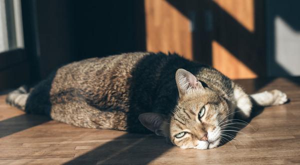 Cat sleep on the table indoor