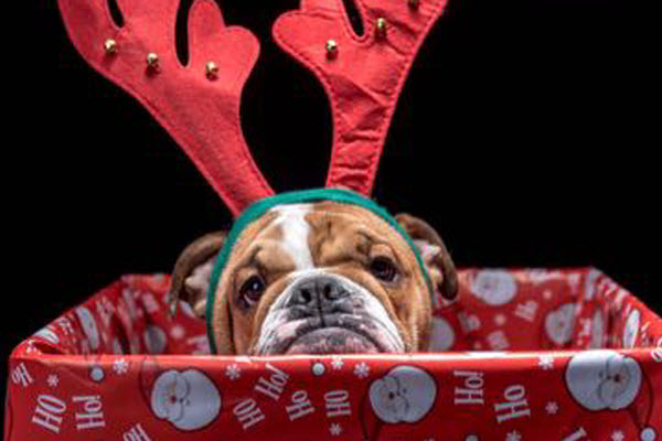 7 Rules to Follow Before Deciding to Gift a Pet this Christmas