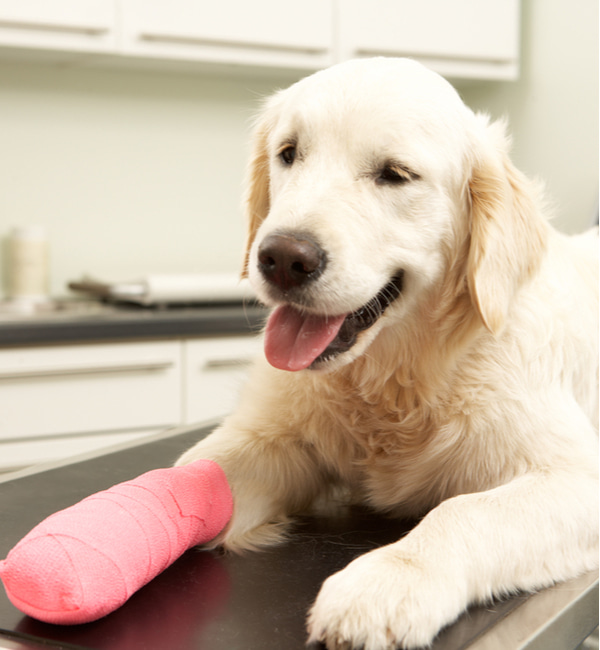 Dog recovering after treatment on table