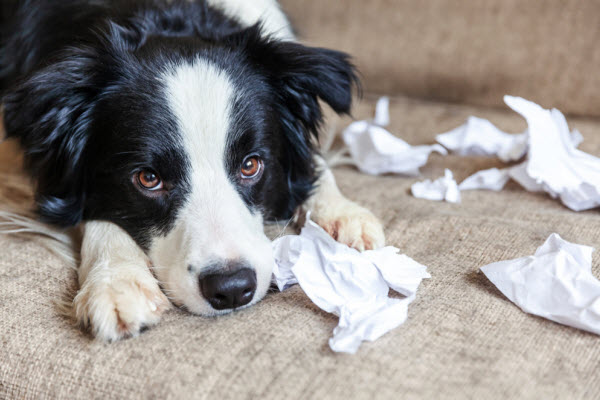 Nervousness in dogs and how to manage it