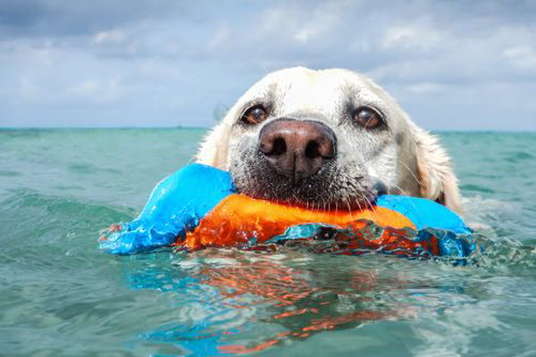 How to keep your pet cool this Summer!