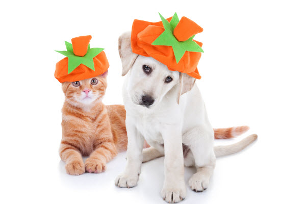 Worried about how to keep your pet safe at Halloween?
