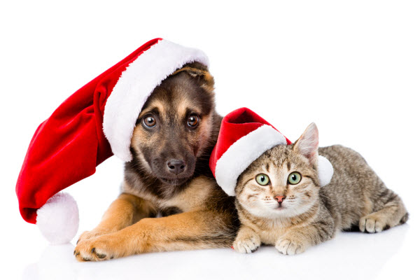 Keeping Your Pet Safe During the Silly Season