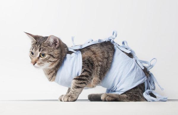 Postoperative bandage on a cat