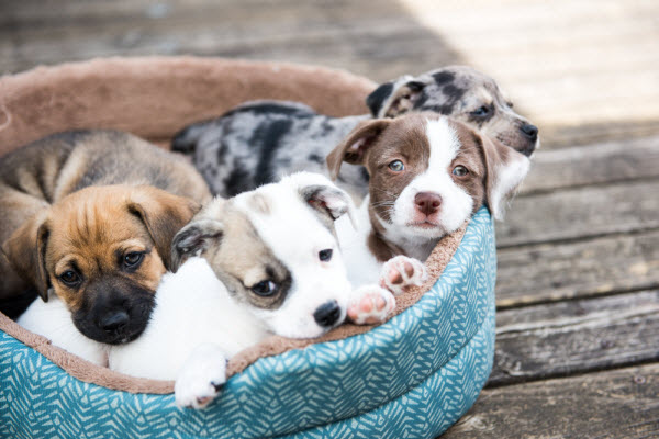 Protect Your Puppy from the New Strain of Parvovirus