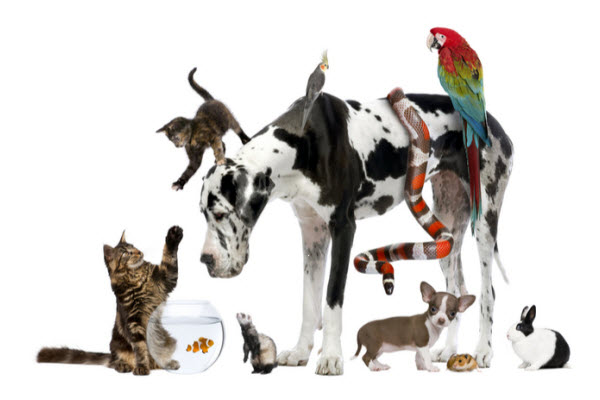 Can different species of pets live together?