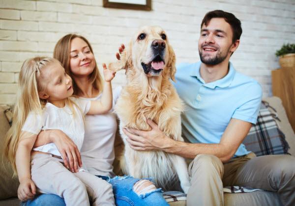 Vetaround - The-Importance-of-Annual-Health-Checks