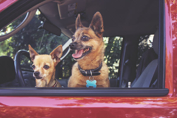 Are you illegally transporting your pet?
