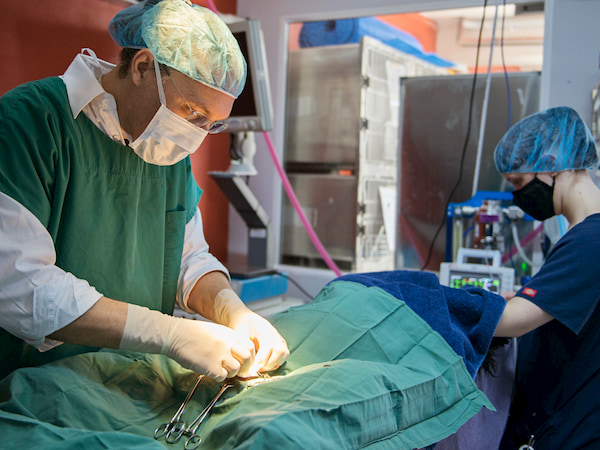 Understanding pet endoscopy