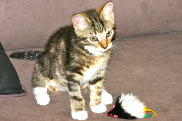 The Cat and the feather