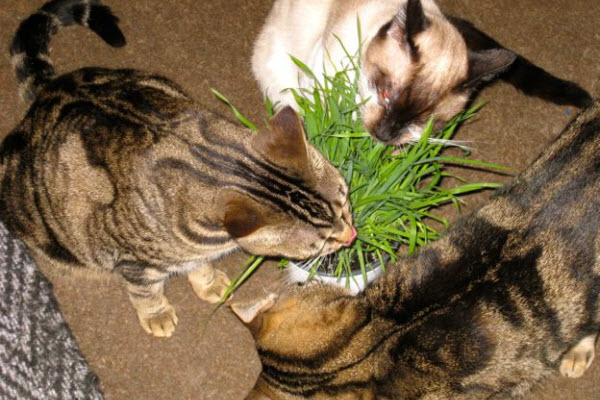 Three cats playing plant