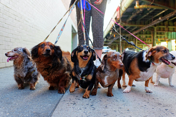 Group of different dogs walking on the street
