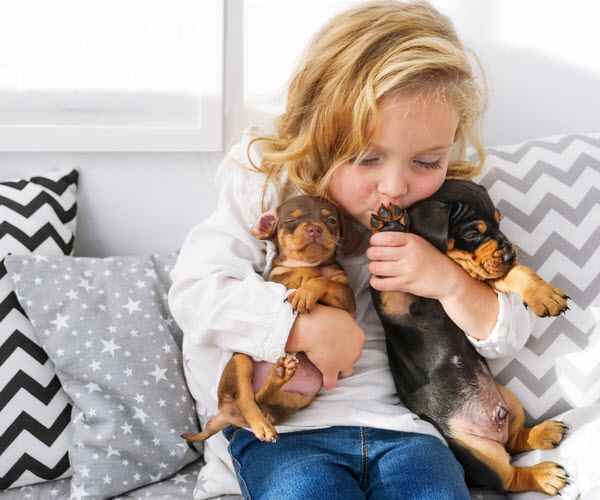 Little girl kissing and hugging puppies while sitting on a couch