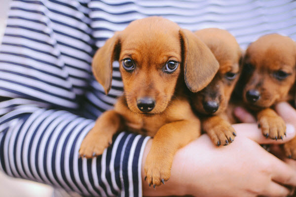 3 puppies placed on the arms