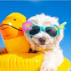 Our top pet safety tips for summer